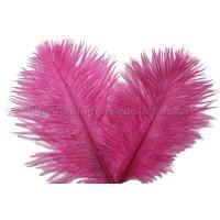 WAPSI Ostrich Marabou Strauss Fl. Pink OA510
