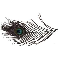 Peakock Eye / Pfauenauge