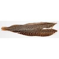Pheasant Tail Nature